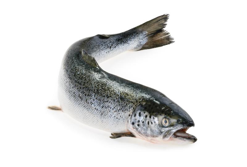 salmão inteiro congelado