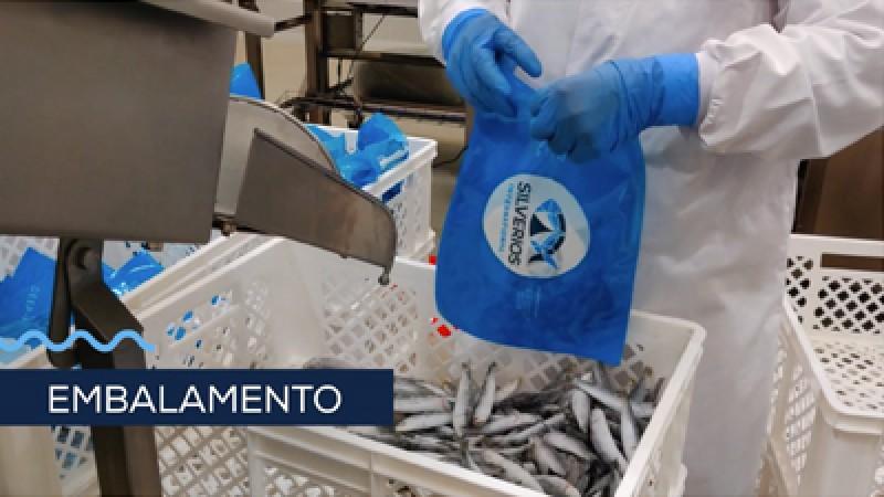 Embalamento de petinga congelada para exportação